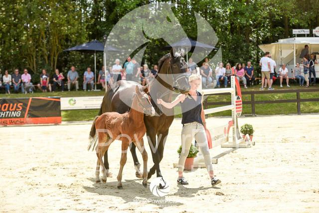 RFV Ochtrup - Fohlenparade-0784