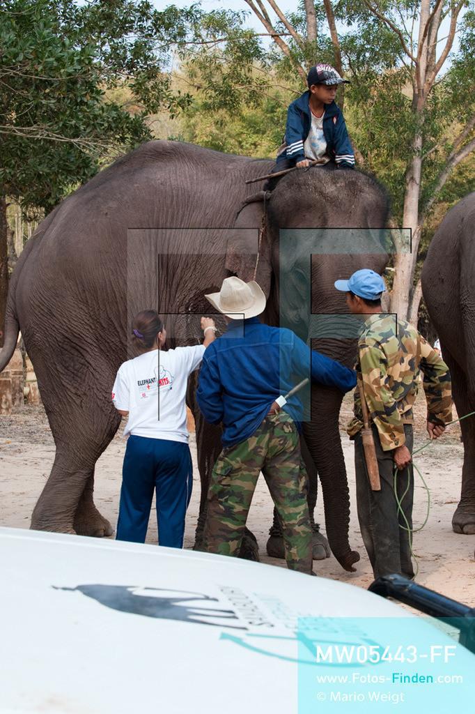 MW05443-FF | Laos | Provinz Sayaboury | Vieng Keo | Reportage: Pey Wan im Elefantendorf | Eine Tierärztin behandelt den Elefant Boun Van. Pey Wan und sein Vater Hom Peng sind dabei. Der achtjährige Pey Wan lebt im Elefantendorf Vieng Keo im Nordwesten von Laos. Im Dorf wohnen ca. 500 Leute mit 17 Arbeitselefanten. Sein Vater Hom Peng hat einen 31 Jahre alten Elefantenbullen namens Boun Van, mit dem er im Holzfällercamp im Dschungel arbeitet. Zum Elefantenfest schmückt Pey Wan den Jumbo und darf mit ihm an der Prozession durchs Dorf teilnehmen. Pey Wan möchte, wie sein Vater, später auch Elefantenführer werden.   ** Feindaten bitte anfragen bei Mario Weigt Photography, info@asia-stories.com **