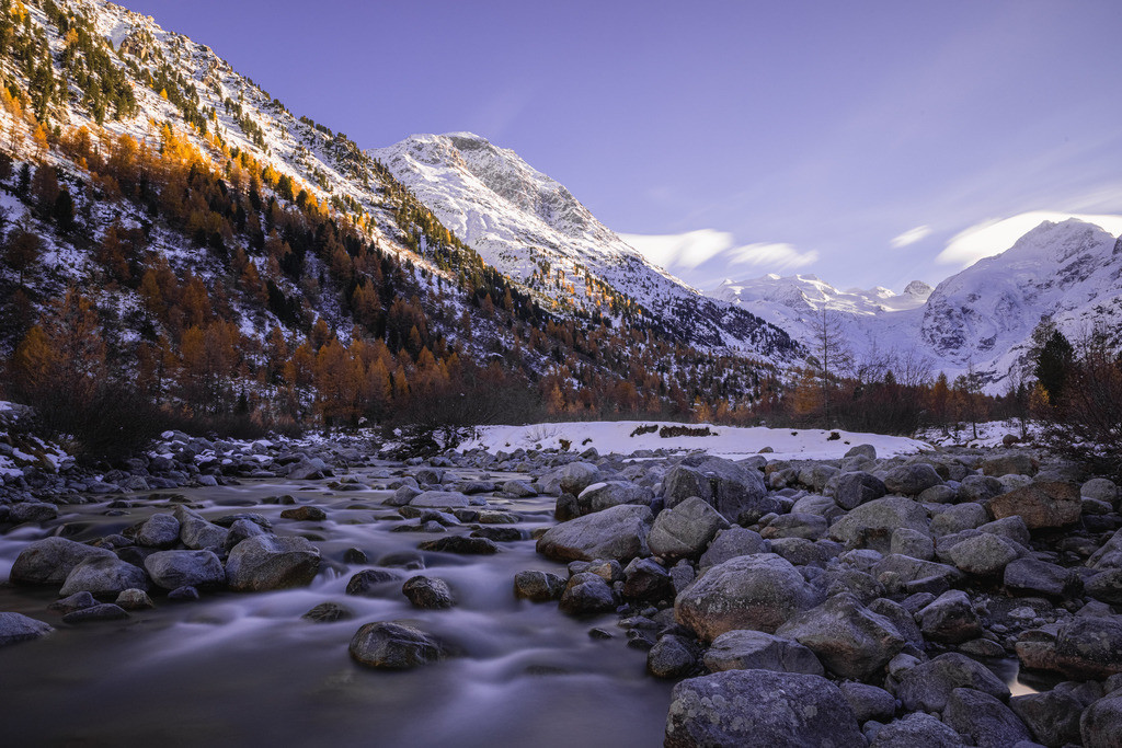 River between larches | This mountains river comes directly from the glaciers of the Bernina area.