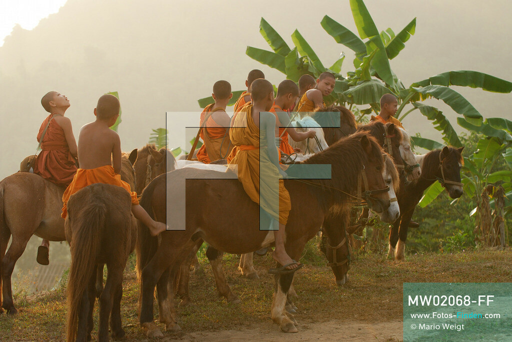 MW02068-FF   Thailand   Goldenes Dreieck   Reportage: Buddhas Ranch im Dschungel   Junge Mönche auf ihren Pferden am Morgen  ** Feindaten bitte anfragen bei Mario Weigt Photography, info@asia-stories.com **