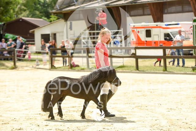 RFV Ochtrup - Fohlenparade-0967