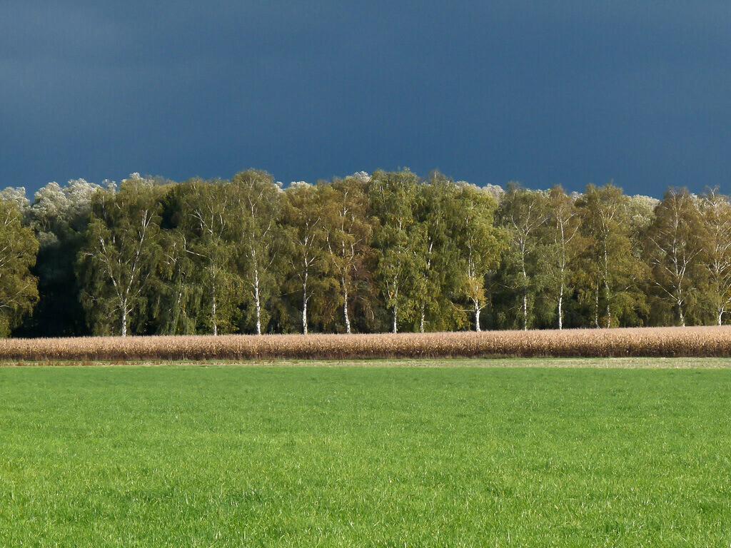 Aufziehender Herbststurm