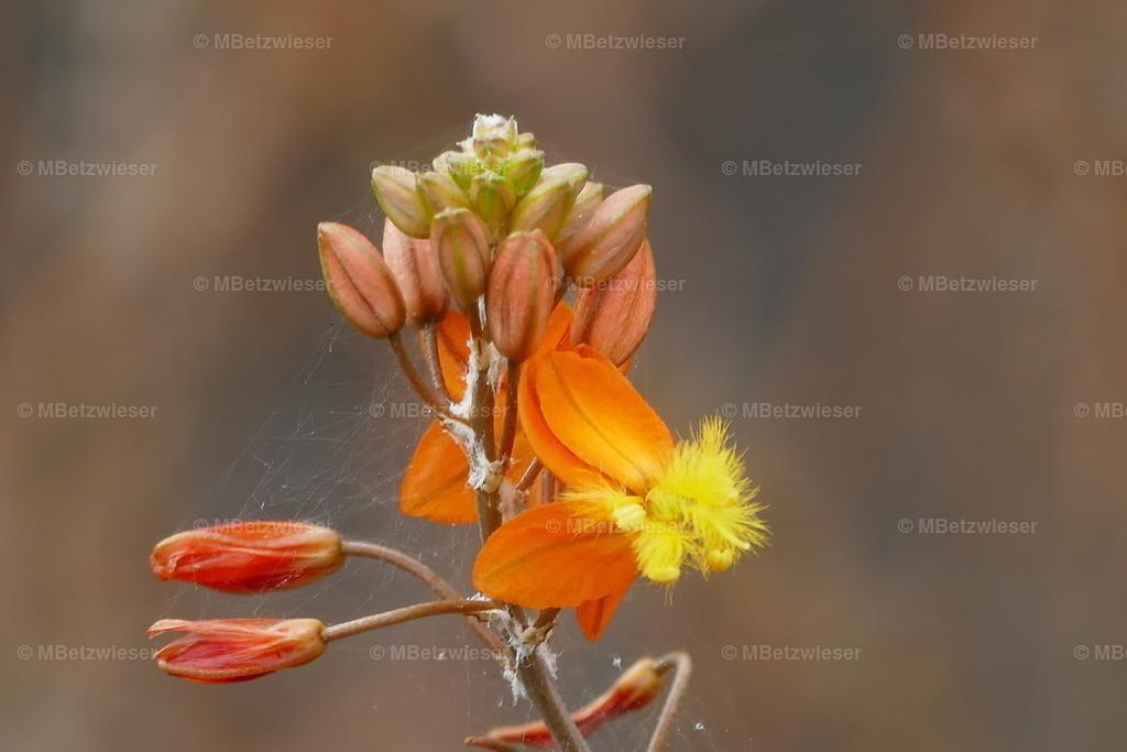 P1010649 | Wunderwerk der Natur. Unbekannte Pflanze auf La Palma
