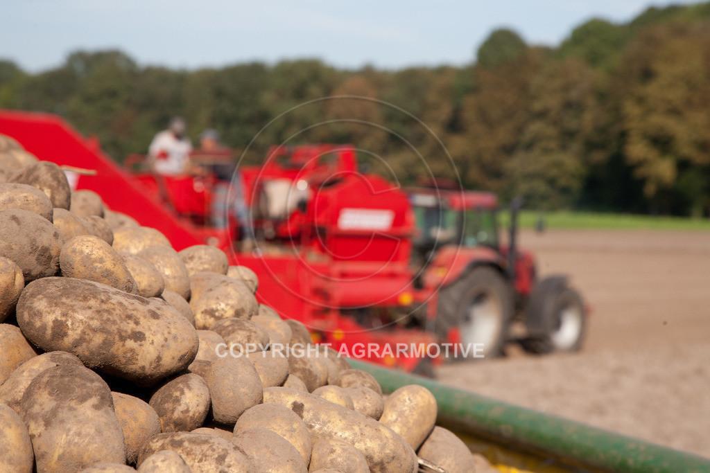 20110929-IMG_5965 | Ernte auf einem Kartoffelfeld - AGRARBILDER