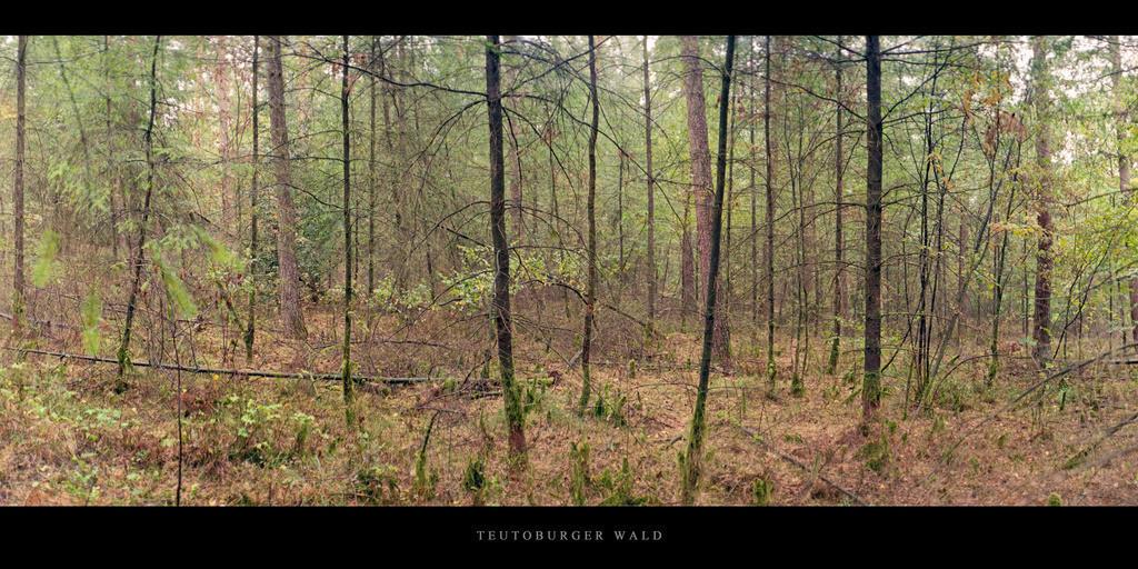 Teutoburger Wald | Mischwald im Teutoburger Wald