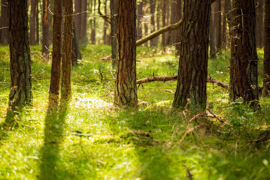Waldstrecke auf Rügen