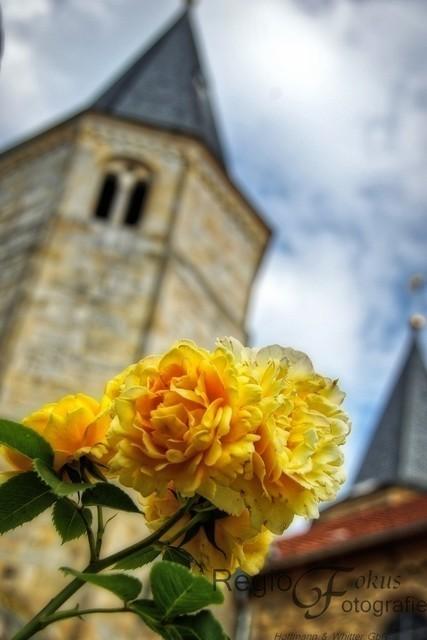 Gelbe Rose | Gelbe Rose vor dem Turm der Godehardikirche