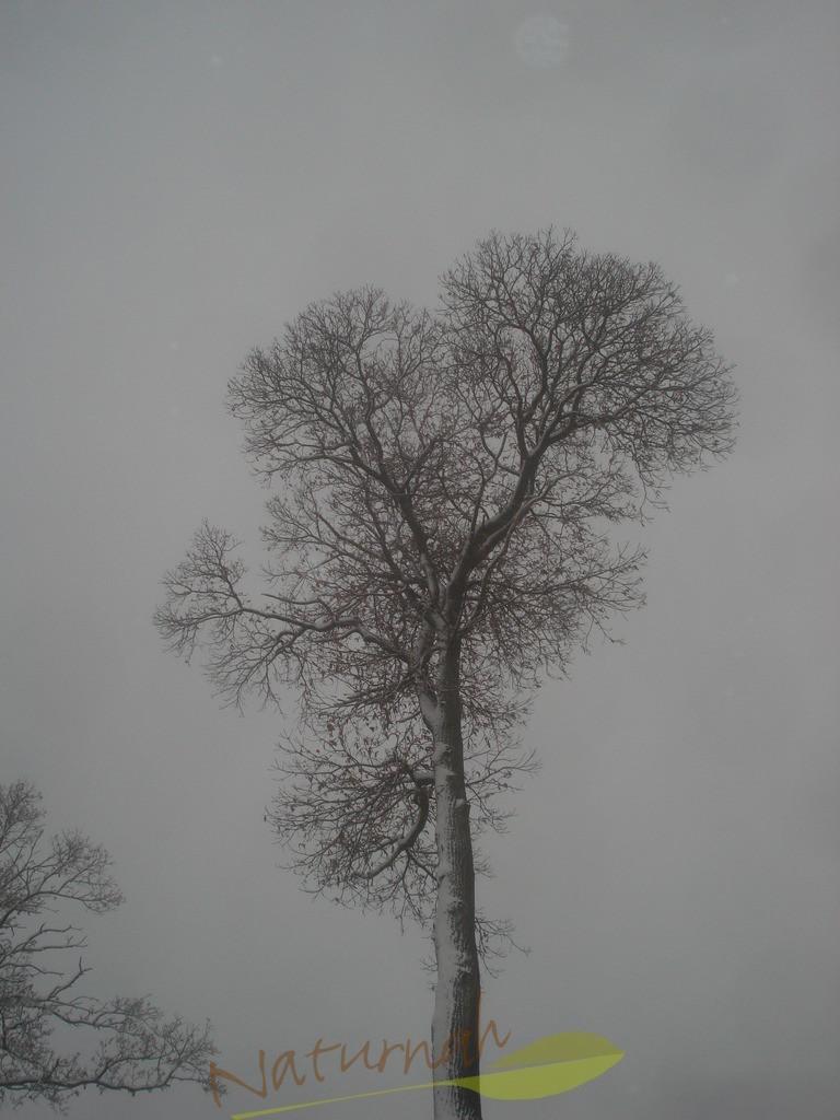 Klosterbaum im Winterzauber 1