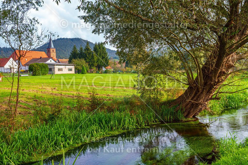 Blick auf die Kirche Fischbach bei Dahn, Fluss und Baum im Vordergrund