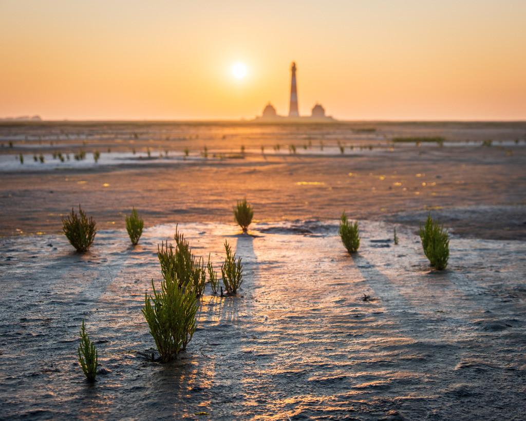Westerhever Morning III   Der Leuchtturm Westerhever im goldenen Morgenlicht