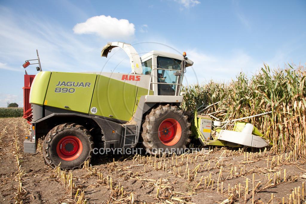 20080914-IMG_8955 | Silomais wird gehäckselt - AGRARFOTO Bilder aus der Landwirtschaft