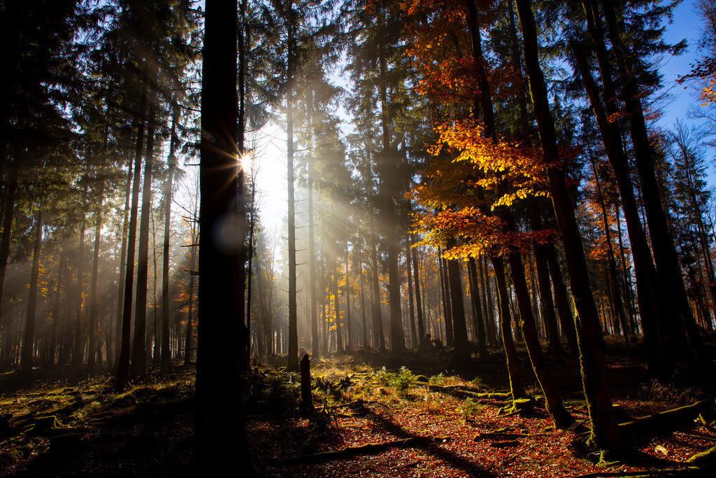 JT-181107-028 | Herbst, Nebel, die Sonne bricht gerade durch den Dunst, Landschaft, Wald, in der Nähe von Jagdhaus, Schmallenberg, Sauerland, NRW, Deutschland, Europa.