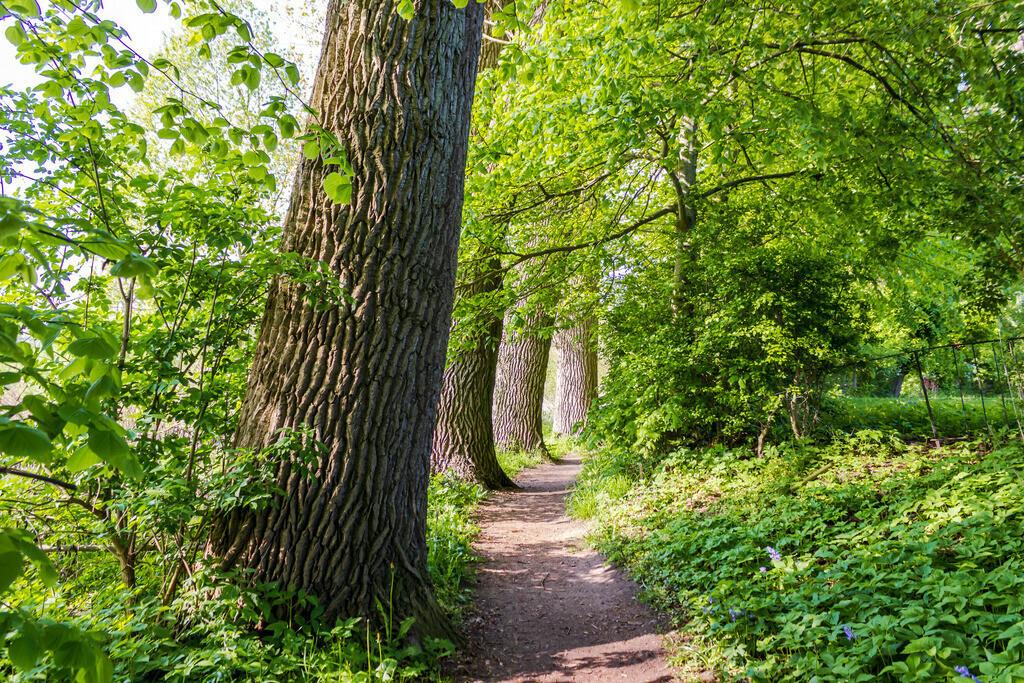 Frühling an der Schlei   Bäume am Wegesrand in Arnis