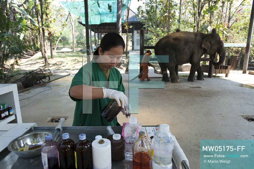 MW05175-FF | Thailand | Lampang | Reportage: Krankenhaus für Elefanten | Tierärztin Cruetong Kayan bereitet die Medizin für die Behandlung der Elefantenkuh Yui in der Krankenstation vor.  ** Feindaten bitte anfragen bei Mario Weigt Photography, info@asia-stories.com **
