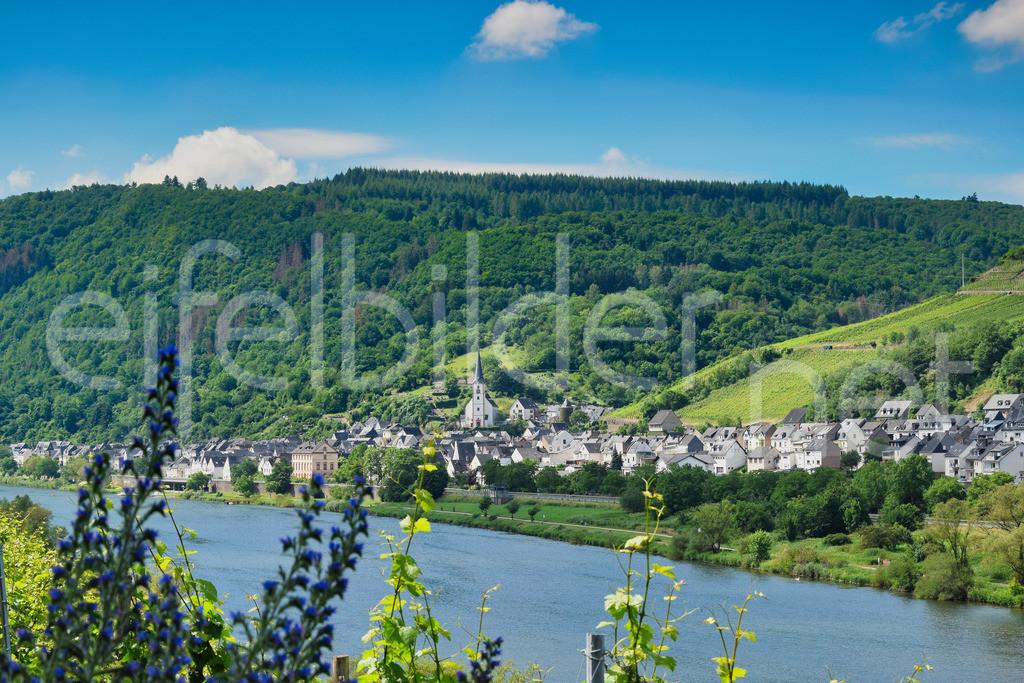 Mosel - Blick auf Briedel   Blick auf den idyllischen Weinbauort Briedel