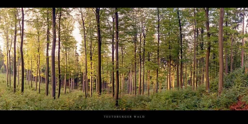 Teutoburger Wald   Buchenwald im Teutoburger Wald
