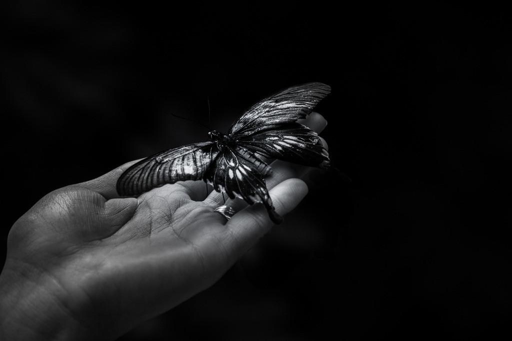 Voller Vertrauen | Glück ist wie ein Schmetterling. Will man es einfangen, so entwischt es einem immer wieder. Doch wenn du geduldig abwartest, läßt es sich vielleicht von selbst auf deiner Hand nieder. Nathaniel Hawthorne