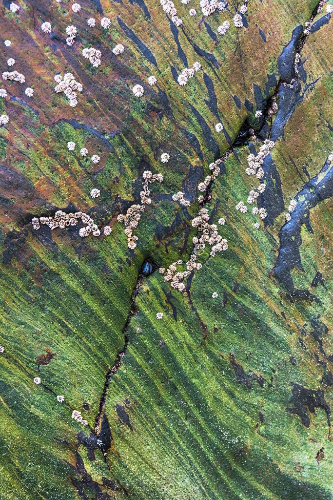 Steinstrukturen    Triptychon Clonakilty I - 2   Best. Nr. irl_2016_04_3994   Gestein in Grüntönen an der Küste von Clonakilty, Irland