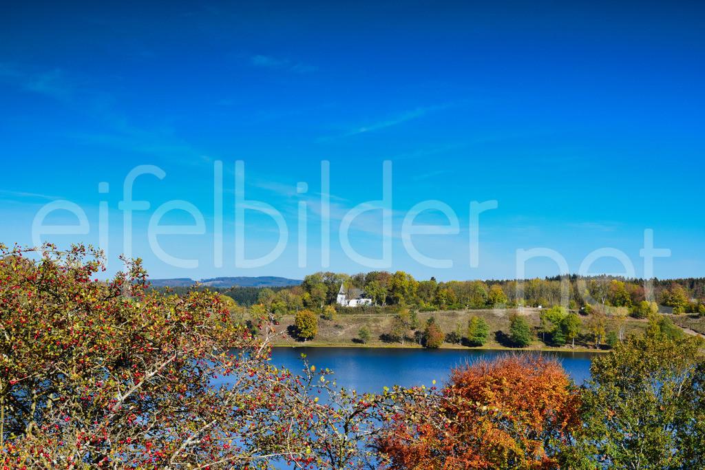 Weinfelder Maar (Totenmaar) im Herbst | Daun, Eifel / Vulkaneifel