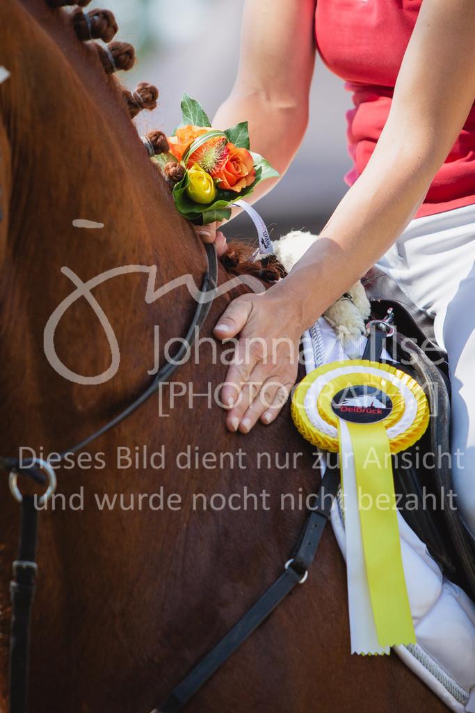 200819_Delbrück_Sprpf-A_2_1-273 | Delbrück Masters 2020 Springpferdeprüfung Kl. A** 4-6jährige Pferde