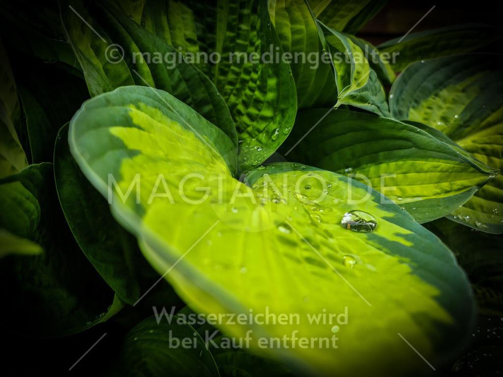Waterdrop on Leaf full