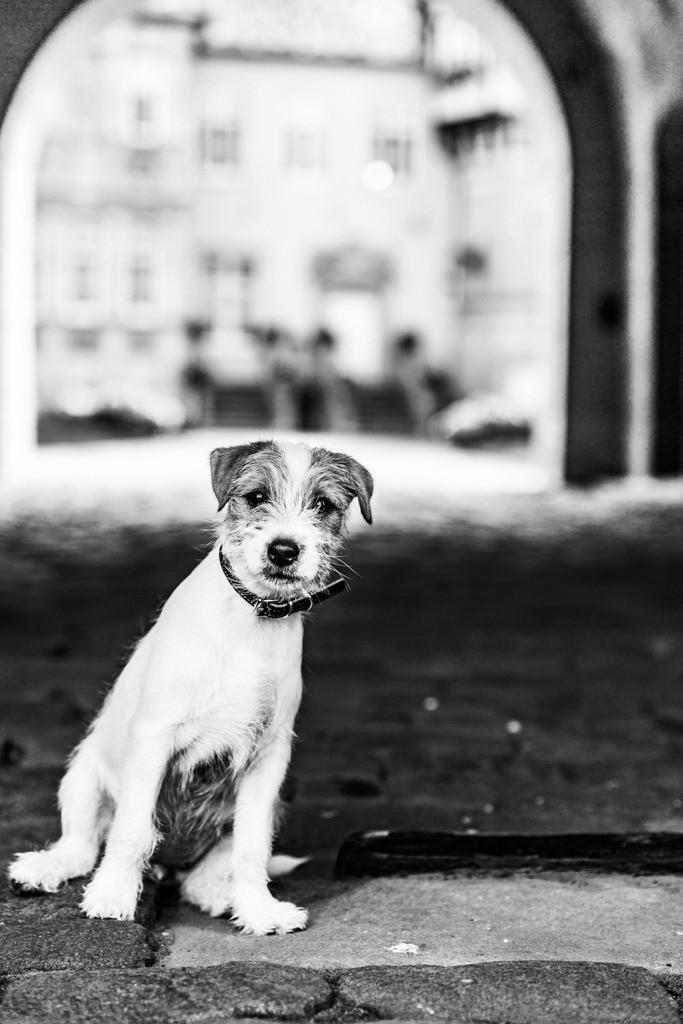 dogs--elmar.pics_4980