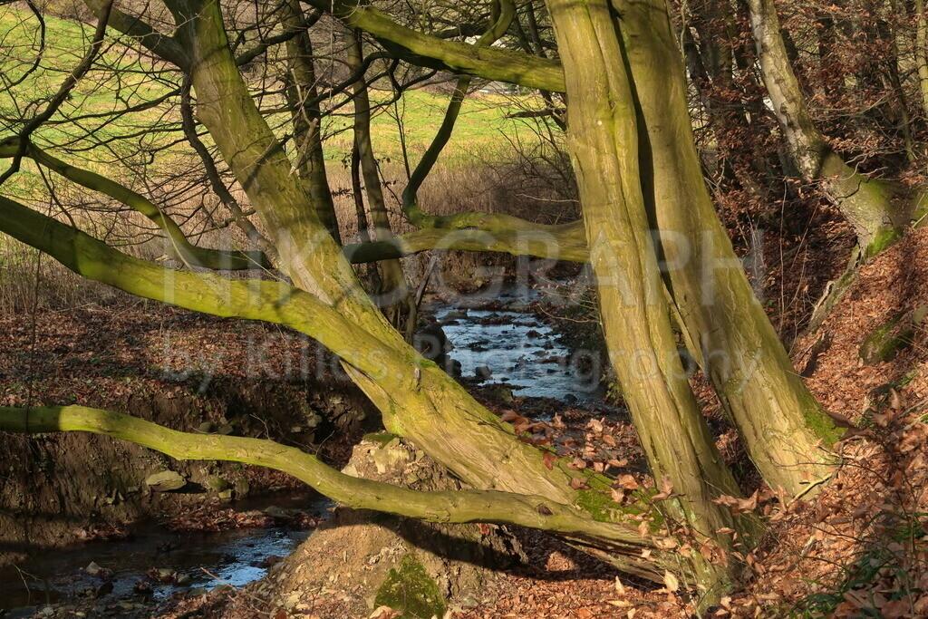 Am Lösseler Bach in Iserlohn | Die Sonnenstrahlen der Wintersonne treffen auf die Bäume am Ufer des Lösseler Baches in Iserlohn