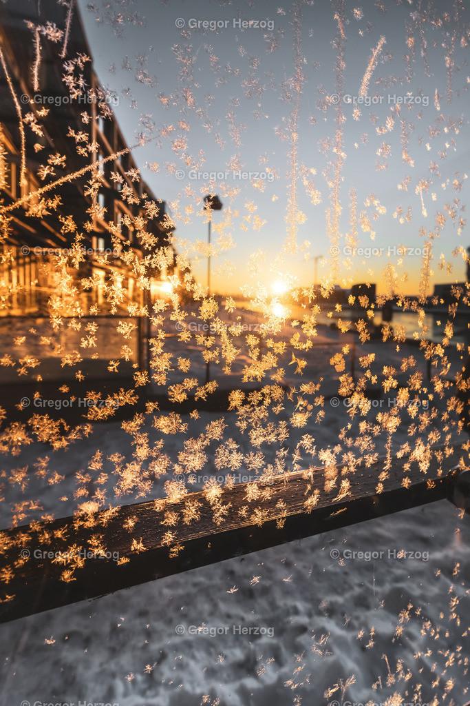 Ice Flowers | Ice Flowers am Hafen im Februar 2021