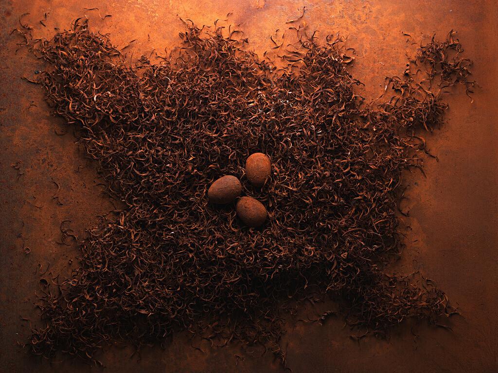 Rostnest | Nest aus verrosteten Spänen mit Rosteieren,