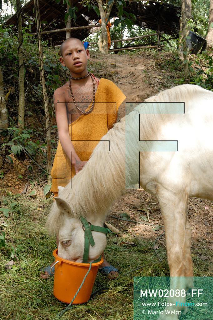MW02088-FF | Thailand | Goldenes Dreieck | Reportage: Buddhas Ranch im Dschungel | Der junge Mönch Pansaen füttert sein Pferd Phet Thewada.  ** Feindaten bitte anfragen bei Mario Weigt Photography, info@asia-stories.com **
