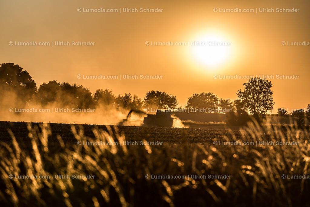 10049-6385 - Getreideernte | max. Bildgröße A3 | 300dpi