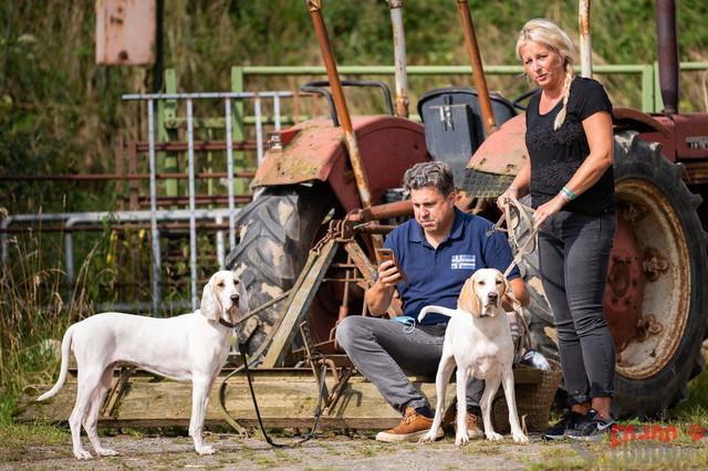 Ausstellung   CCF Verein fuer franzoesische Laufhunde e.V. angeschlossen Schweizer Laufhunde und Schweizer Niederlaufhunde. 20. Clubschau in Brilon  07.08.2021 Foto: Leo Wyden