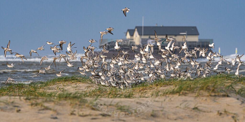 MOB6197 | Aufbruchstimmung Seevögel