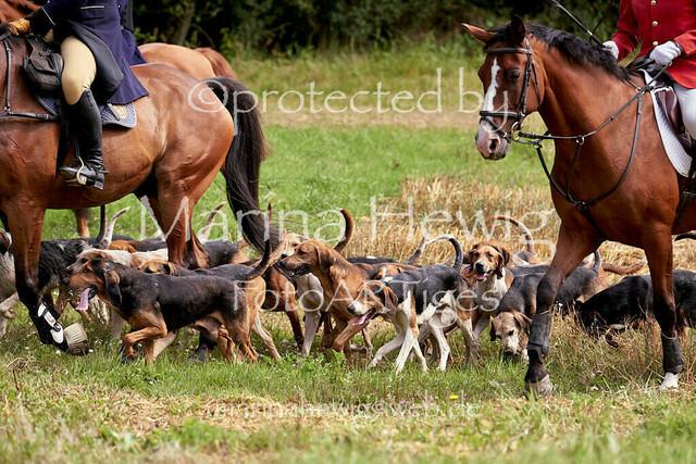Jagd Knoop 217217_Marina Hewig