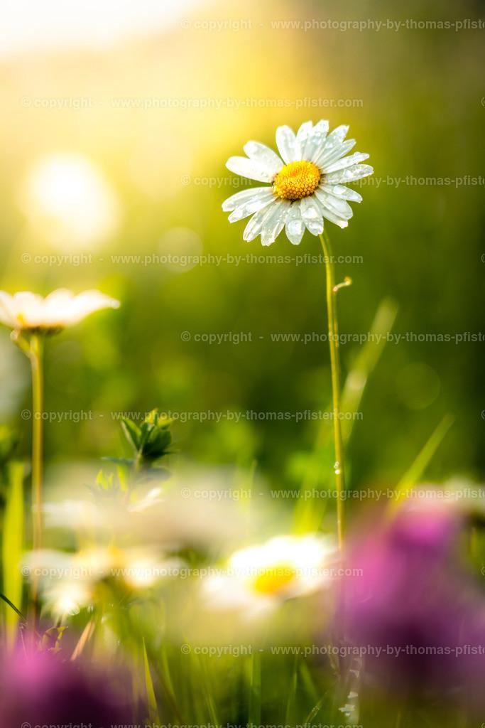 Frühling im Tuxertal-3