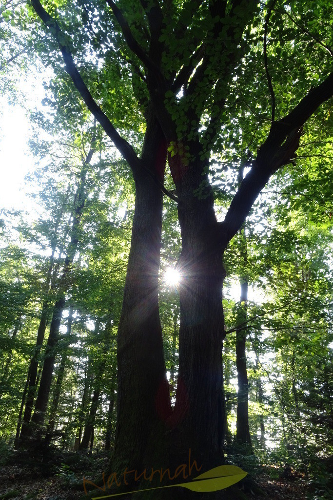 Kairos Kraftbaum | Kairos ist der griechische Gott des rechten Augenblicks..  Das Bild zeigt, dass es gut ist, die Gelegenheit beim Schopf zu packen und im rechten Moment am rechten Ort zu sein.