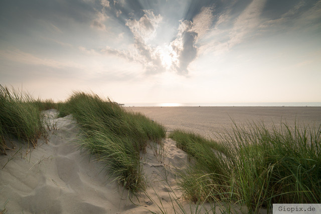 Sanddünen zur goldenen Stunde | Sanddünen bei Renesse Beach zur goldenen Stunde