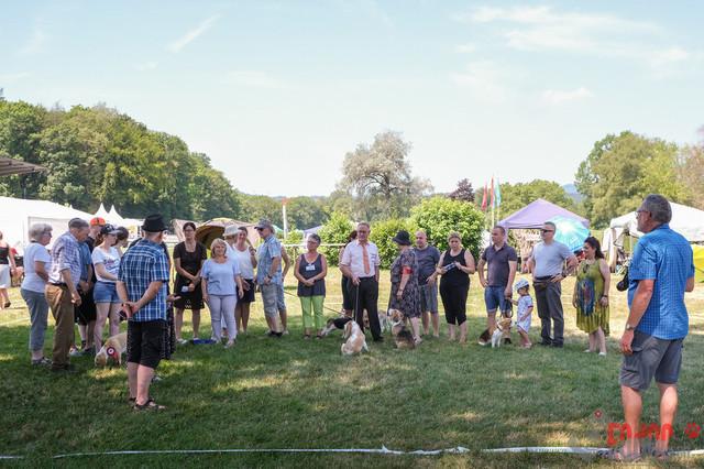 IHA Aarau | Beagle, Sonntag IHA Aarau 30.06.2019 Foto: Leo Wyden