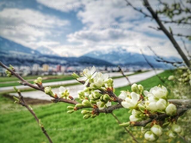 IMG_20200409_115250-01 | Obstblüte in Tirol