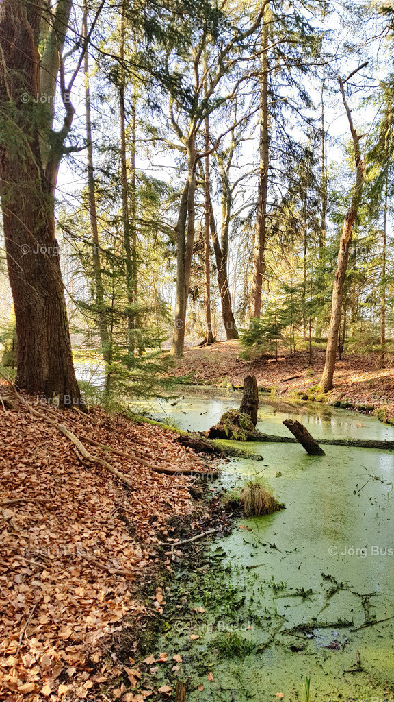 Wald_10