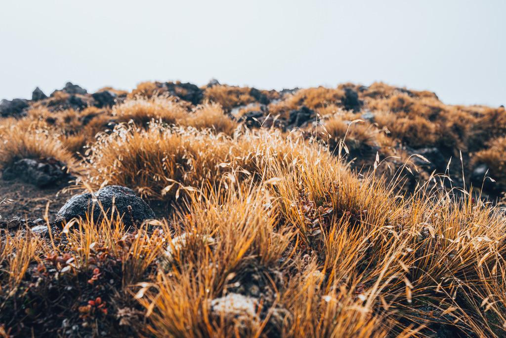Flora im Tongariro Nationalpark | Flora im Tongariro Nationalpark