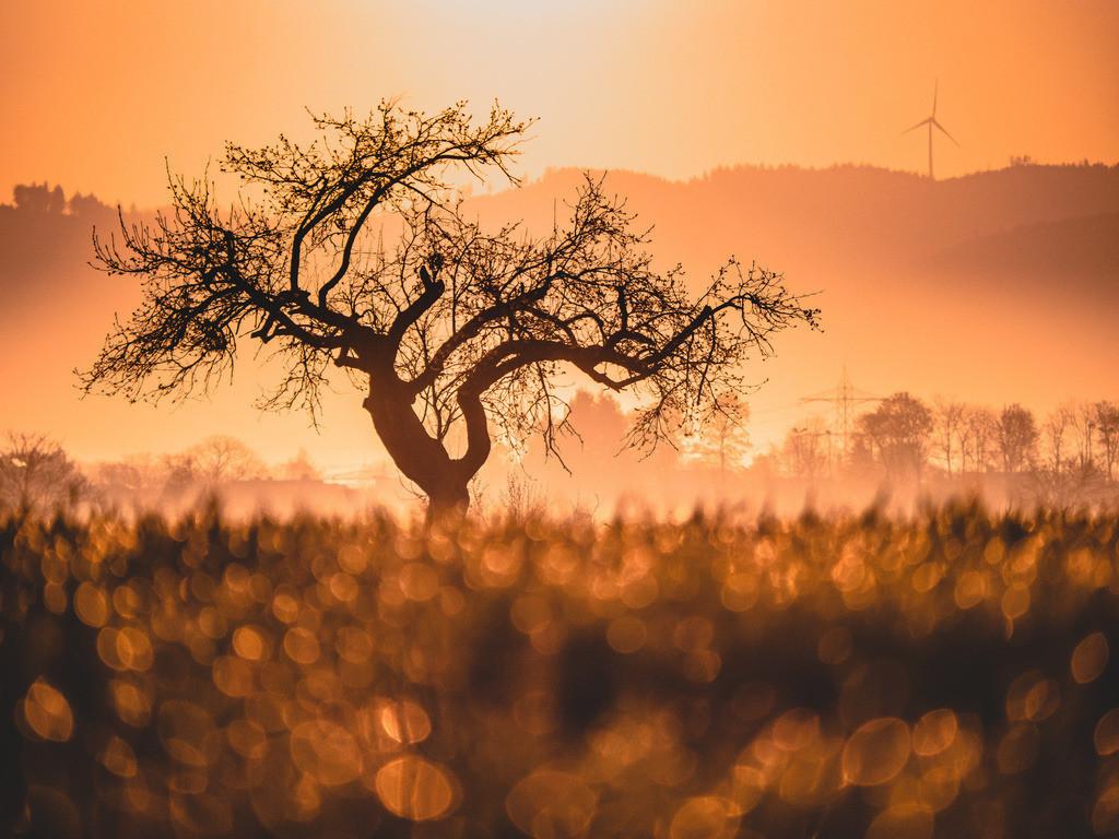 Frühlings-Zauberlicht | Satte Farben und goldenes Licht in den Feldern im Ried bei Schwanau-Allmannsweier.