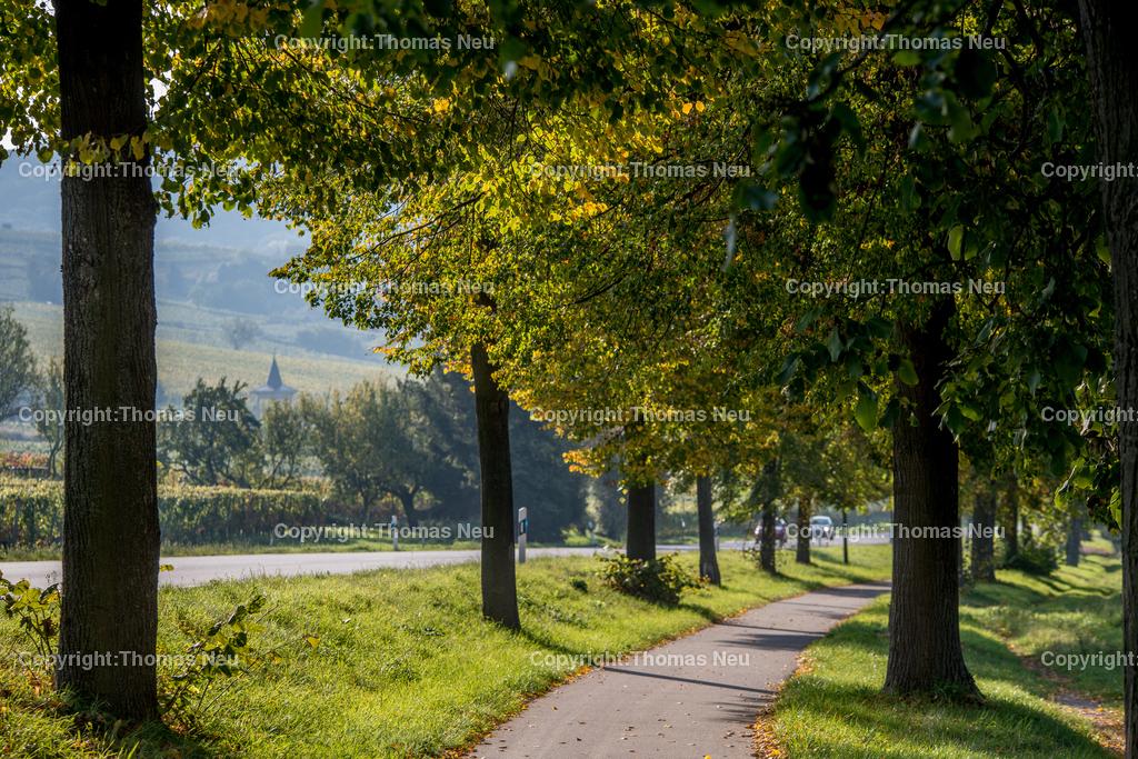 Radweg | Heppenheim, Herbst, zwischen Heppenheim und Bensheim, ,, Bild: Thomas Neu