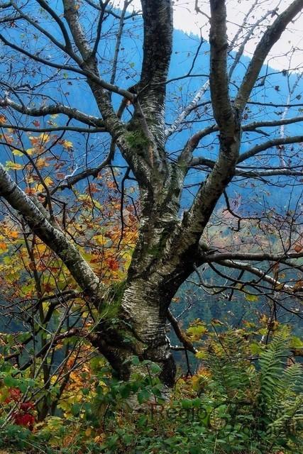 Die Farben der Natur | Fast surreal anmutender Baum inmitten der bunten Herbstlandschaft