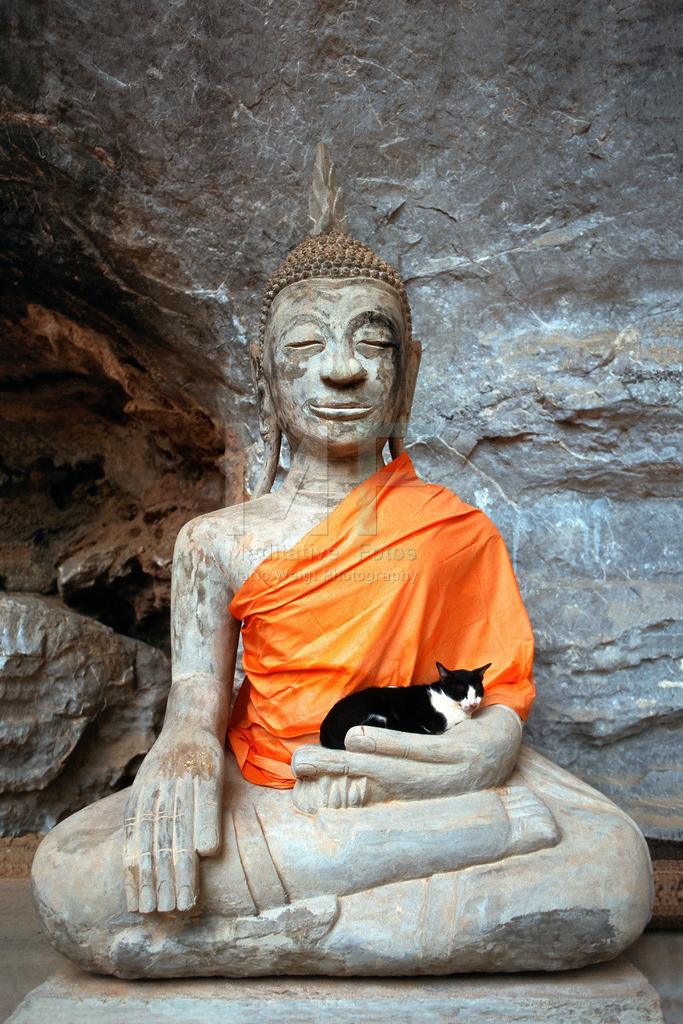 Buddha and Cat | Ruhende Katze im Arm einer Buddha-Statue  ACHTUNG: Sollten Sie dieses Foto gern als Leinwand bestellen wollen, dann wählen Sie bitte bis zu der Größe 40 x 60 die Option