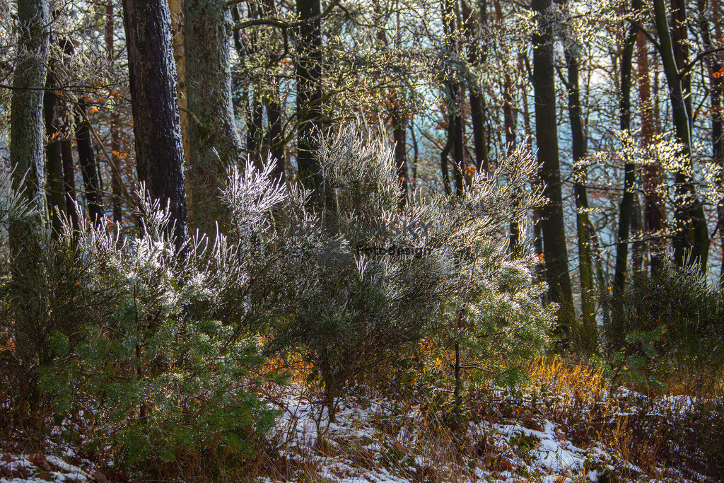 Remains of snow in the forest | Format 2x3