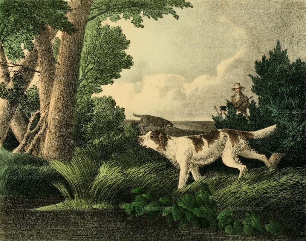 Doughty_ T. (1793-1856) - Cabinet of Natural History 1830 - Woodcock Shooting