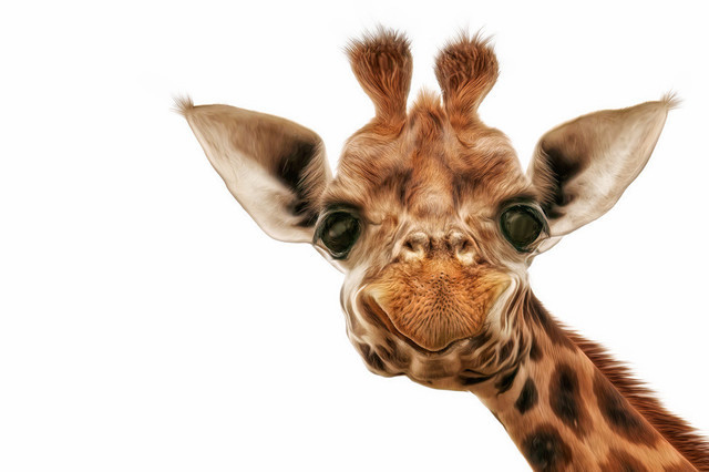 Giraffe Comic Look