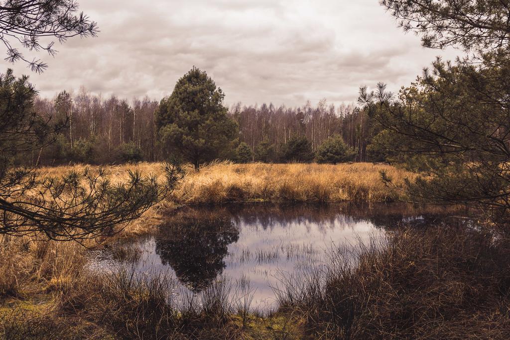 Großes und Weißes Moor | Im Großen und Weißen Moor in Rotenburg (Wümme)