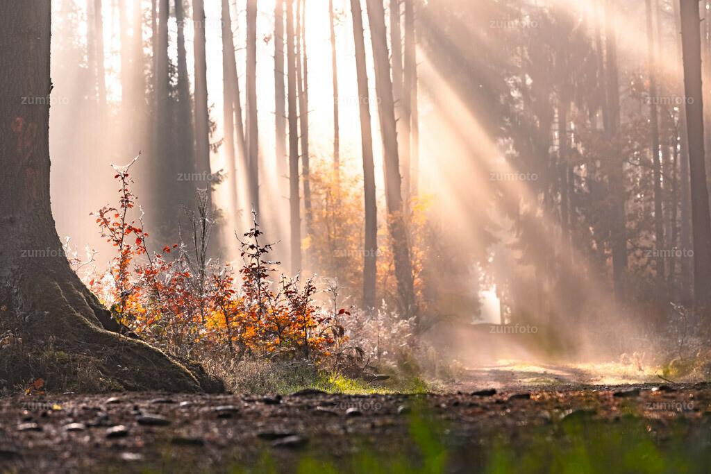 181107_1012-5619-HDR | Nebelstrahlen im Herbstwald.   ⠀⠀⠀⠀⠀⠀⠀⠀⠀ Das Bild entstand Anfang November im Wald bei Loppin. Die Stelle ist ca. 15 km von Waren (Müritz) entfernt. ⠀⠀⠀⠀⠀⠀⠀⠀⠀ --Dateigröße 6600 x 4400 Pixel--